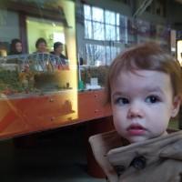Eli Whitney Museum